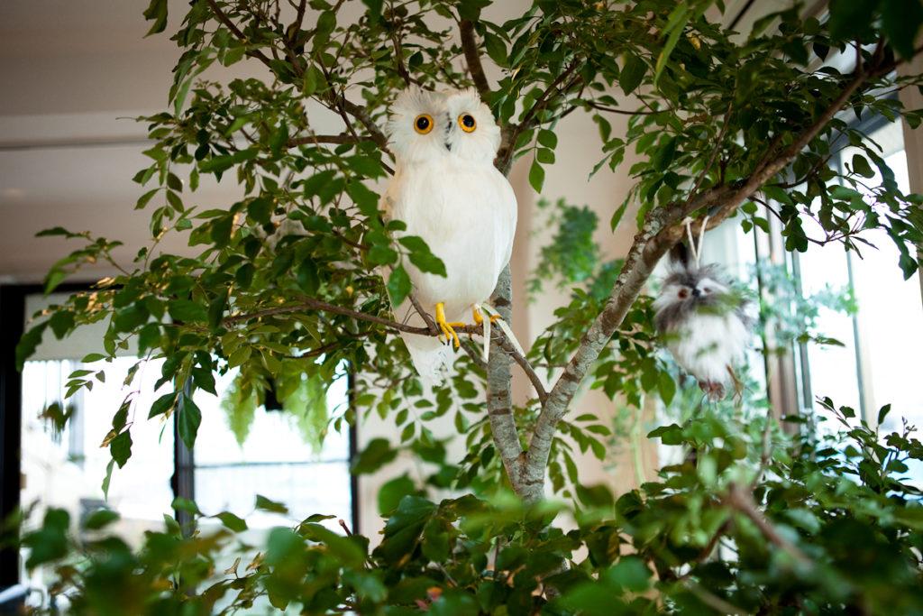 生活感、植物、マンションスタジオ、関東都内の自然光スタジオ、世田谷区、眺望良好、エグゼクティブ