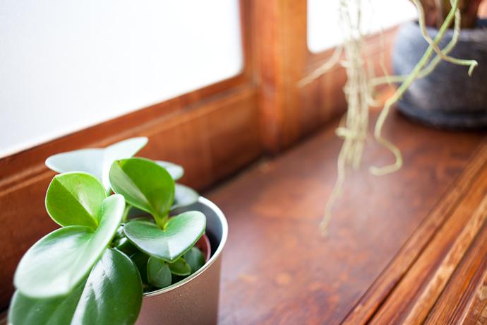 植物、和モダン、関東都内の古民家と自然光スタジオ
